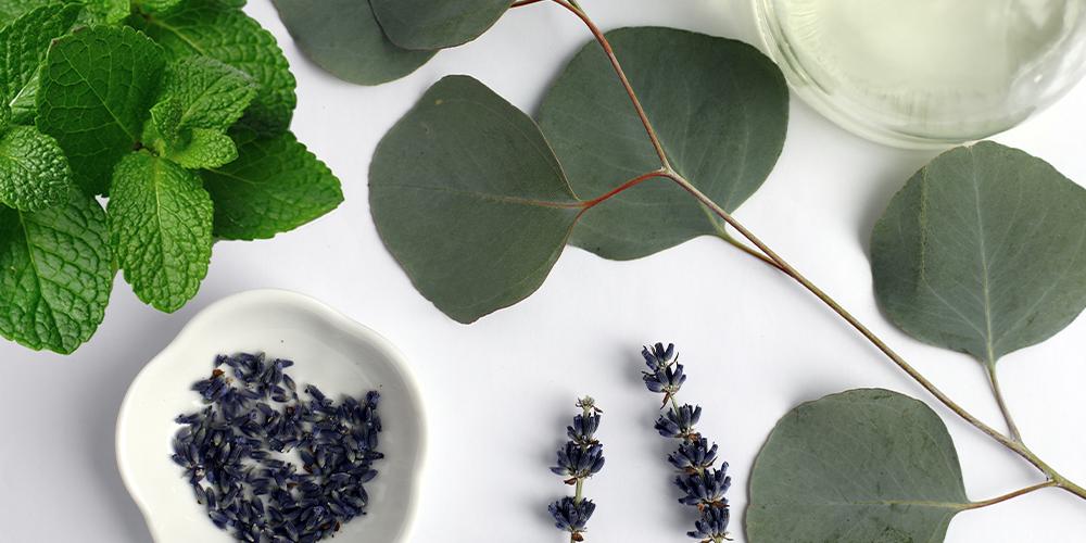 Prirodna inhalacija – uticaj lavande, nane i eukaliptusa